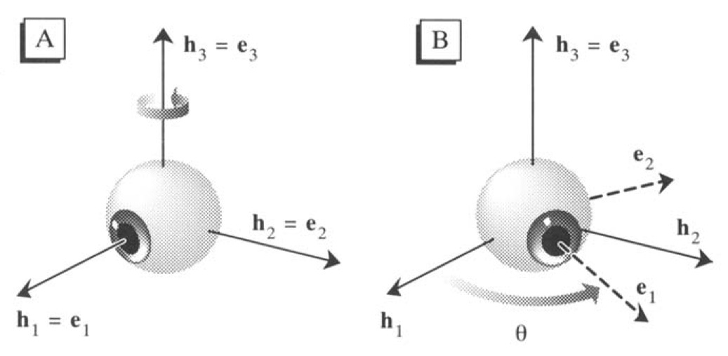 3D eye coordinate systems in the primary reference position, left panel, and after a leftward rotation, right panel (Haslwanter 1995).